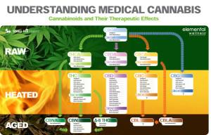cannabinoid-profiles-a-crash-course-in-cbga-1024x655