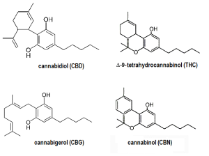 four-major-natural-cannabinoids